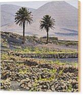 Vineyard On Lanzarote Wood Print