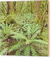 Virgin Rainforest Wilderness Of Fiordland Np Nz Wood Print