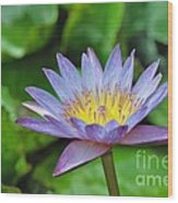 Water Lily 13 Wood Print