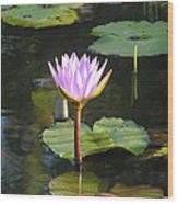Pond Of Water Lily Wood Print
