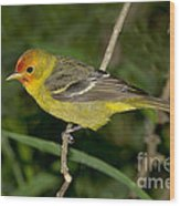 Western Tanager Wood Print