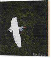 White Egret In Flight Wood Print