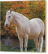 White Horse In Autumn Wood Print
