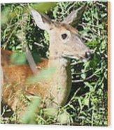 White Tailed Deer Portrait Wood Print