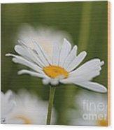 Wildflower Named Oxeye Daisy Wood Print