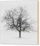 Winter Tree In Fog Wood Print by Elena Elisseeva