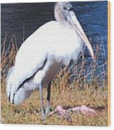 Woodstork Wood Print