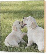 Yellow Labrador Retriever Puppies Wood Print by Linda Freshwaters Arndt