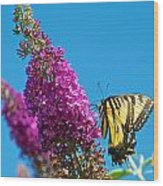 Yellow Tiger Swallowtail Papilio Glaucus Butterfly  Wood Print