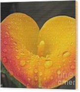Zantedeschia Named Flame Wood Print