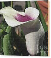 Zantedeschia Named Picasso Wood Print