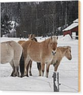 40104-5 Norwegian Horses Wood Print