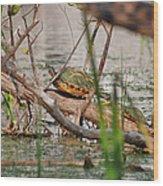 42- Florida Red-bellied Turtle Wood Print
