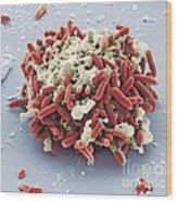 E. Coli Bacteria, Sem Wood Print