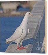 21- White Dove Wood Print