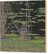 44- Alligator - Great Blue Heron Wood Print