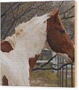 Paint Stallion Wood Print
