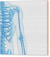 Upper Body Bones, Artwork Wood Print
