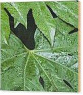 4967 Wood Print