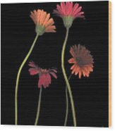 4daisies On Stems Wood Print