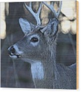 8 Point Buck Wood Print
