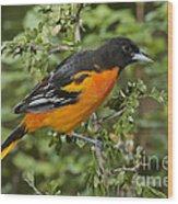 Baltimore Oriole Wood Print