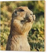 Black-tailed Prairie Dog Wood Print