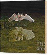 California Leaf-nosed Bat At Pond Wood Print