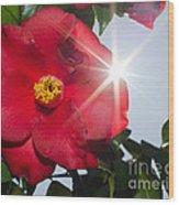 Camellia Flower Wood Print
