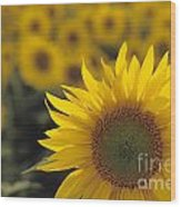 Close-up Of Sunflowers In A Field Wood Print