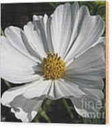 Cosmos Named Sensation Alba Wood Print