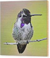 Costa's Hummingbird  Wood Print