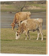 Cow Outdoors Wood Print