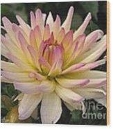 Dahlia Named Camano Ariel Wood Print
