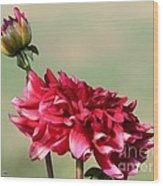 Dahlia Named Caproz Jerry Garcia Wood Print