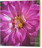 Dahlia Named Pink Bells Wood Print