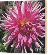 Dahlia Named Pretty In Pink Wood Print