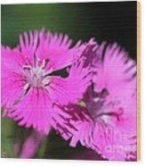 Dianthus Cross Wood Print