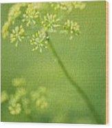 Dill Flower Wood Print