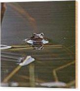 European Common Brown Frog Wood Print