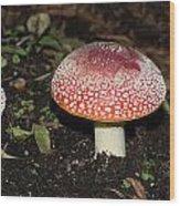 Fairy Mushrooms Wood Print