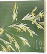 Flowering Brome Grass Wood Print