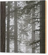 Foggy Coast Redwood Forest Wood Print