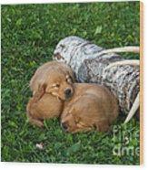 Golden Retriever Puppies Wood Print by Linda Freshwaters Arndt