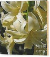 Hyacinth Named City Of Haarlem Wood Print