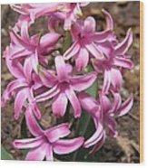 Hyacinth Named Pink Pearl Wood Print