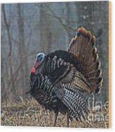 Jake Eastern Wild Turkey Wood Print
