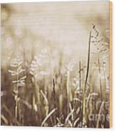 June Grass Flowering Wood Print