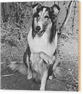 Lassie Wood Print