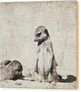 Meerkatz Wood Print